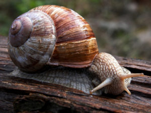 illnesses-of-snail